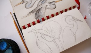 sketchbook-heron